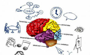 whole-brain-1.jpg
